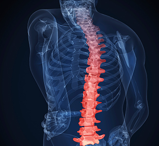 X-ray of a skeleton, highlighting the spine