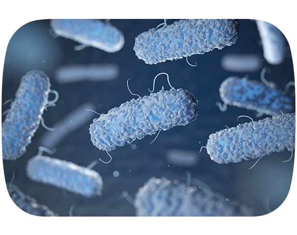 Introducing legionella essentials